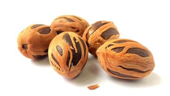 Мускатный орех популярная пряность