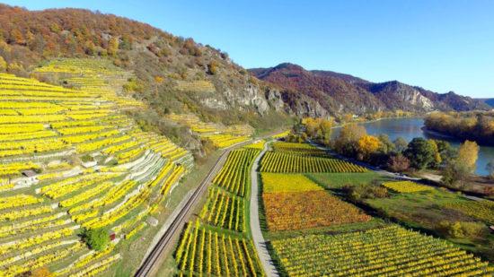 Рейнвейн (Rheinwein) вино с берегов Рейна