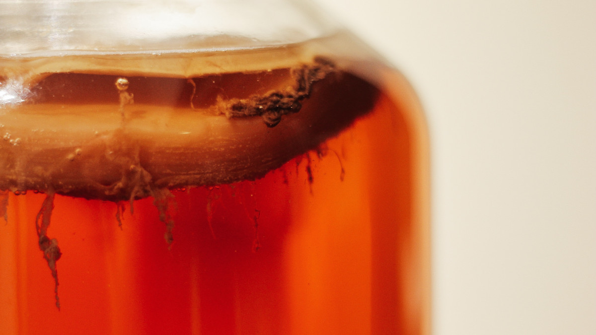 Чайный гриб удивительный напиток